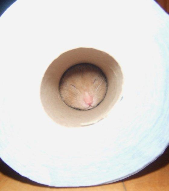Хомяк прячется от кота (5 фото)