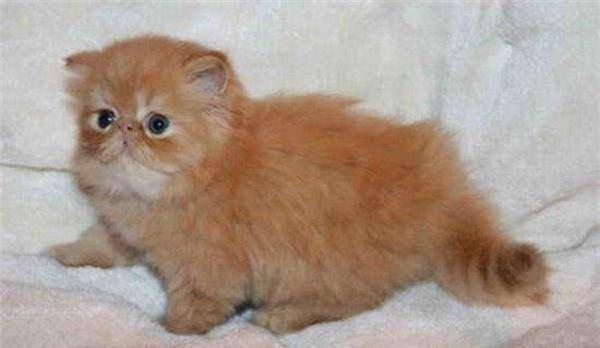 Из котенка в кота (18 фото)
