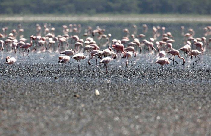Фотографии Кении (40 фото)
