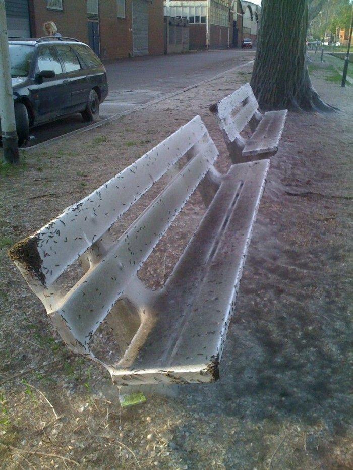 Нашествие гусениц (5 фото)