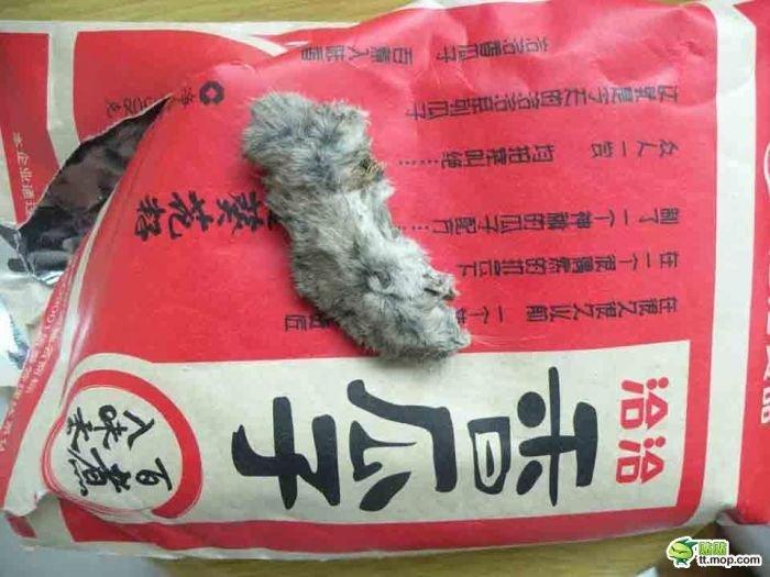 Китайские семечки (4 фото)
