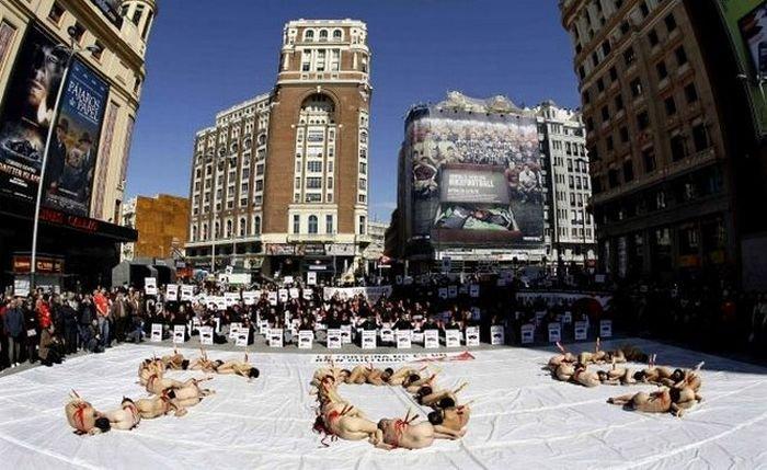 Протест против корриды (9 фото)