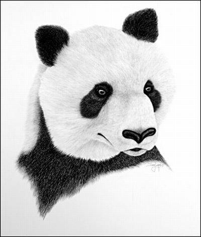 Рисунки карандашом (12 фото)