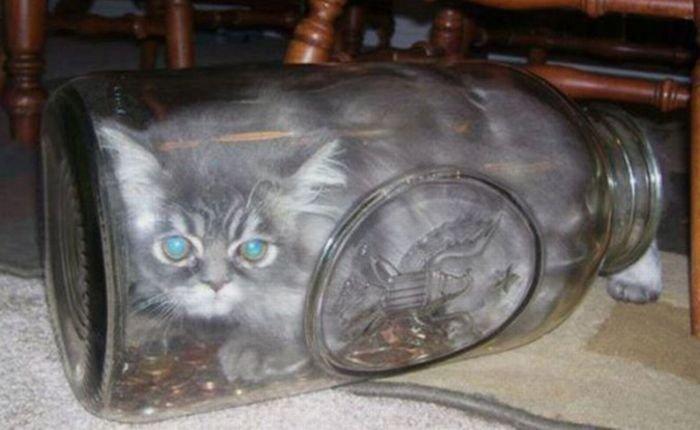 Как правильно хранить котов (99 фото)