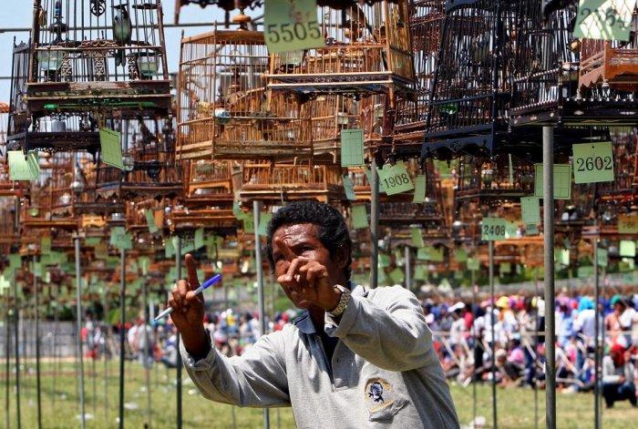 Конкурс птичьего пения (11 фото)