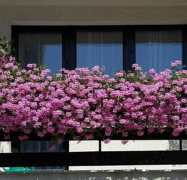 Конкурс на лучший балкон (3 фото)