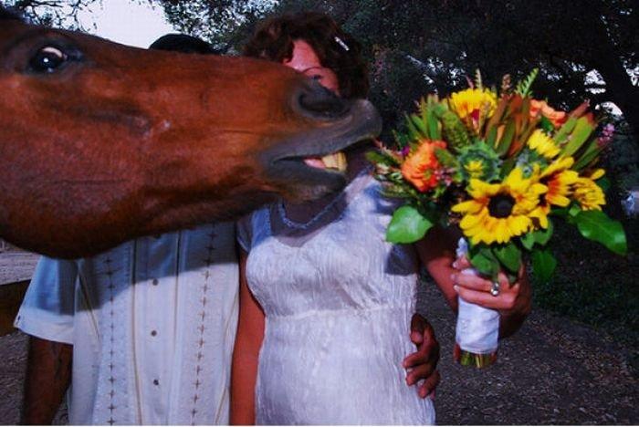 Прикольные фотографии лошадей (23 фото)
