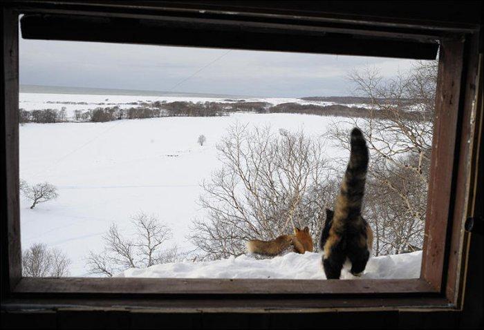 Смелая кошка (5 фото)