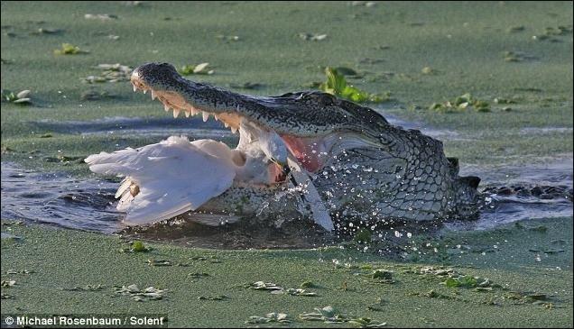 Охотник стал жертвой (4 фото)