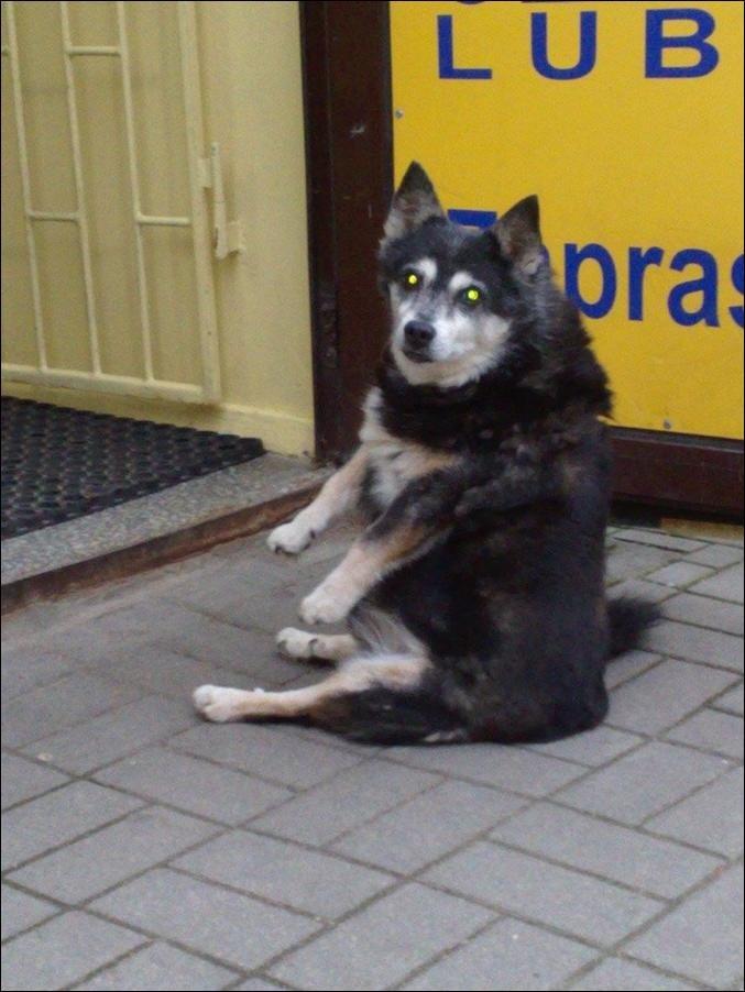 Сидящая собака (3 фото)
