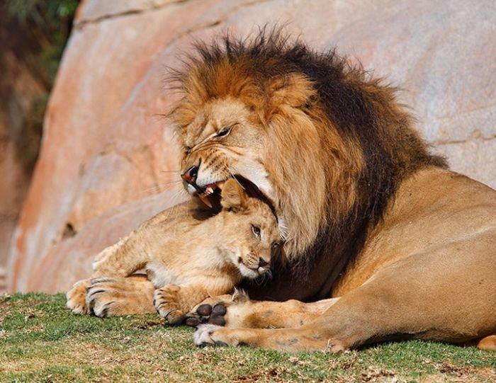 Прикольные фотографии животных (30 фото)