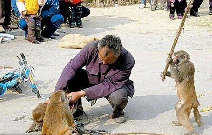 Люди и животные (44 фото)