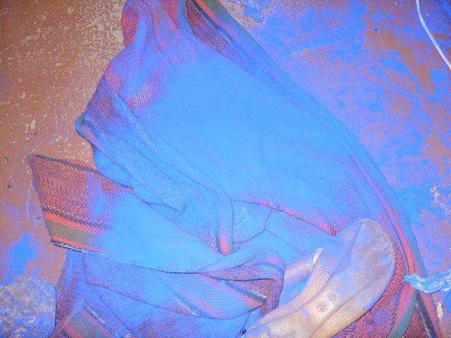 Голубой щенок (7 фото)