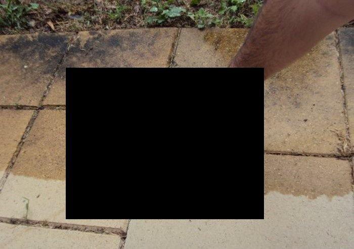 Гигантский червь (4 фото)