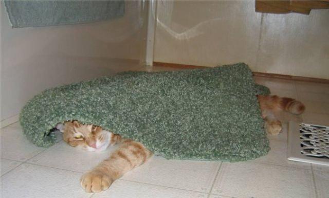 Кот, который спит везде (14 фото)