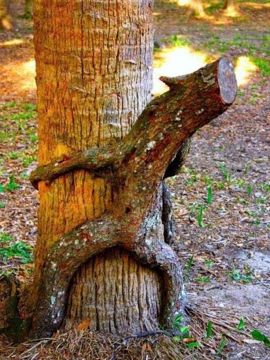 Сексуальные деревья (27 фото)