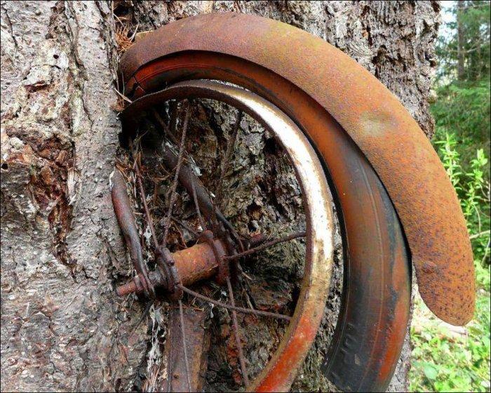 Велосипед в дереве (5 фото)