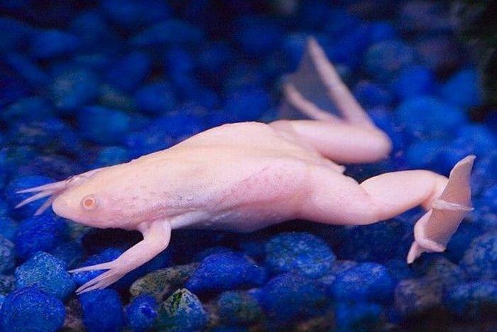 Животные-альбиносы (15 фото)