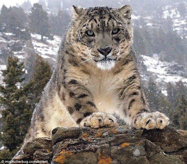 Фотографии диких зверей в упор (11 фото)