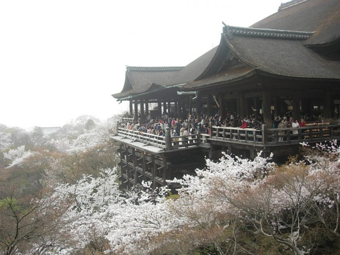 Цветение Сакуры в Японии (18 фото)
