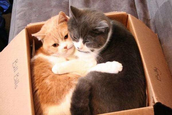 Коты везде (50 фото)