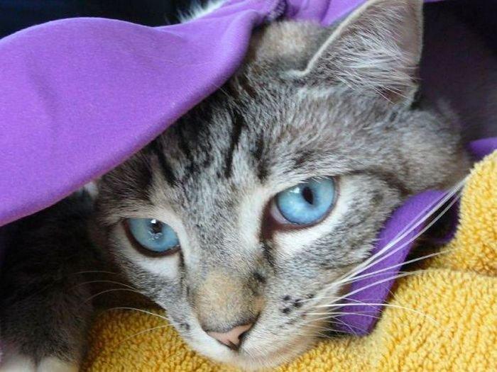 Коты с бюстгальтерами (37 фото)
