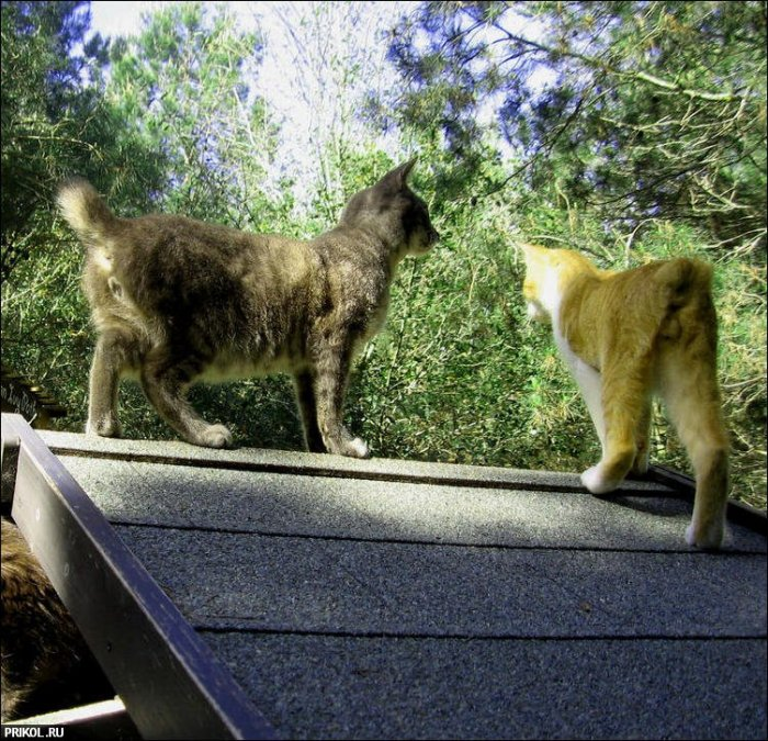 Приют для кошек (42 фото)