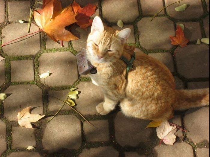 Мир глазами кота (45 фото)