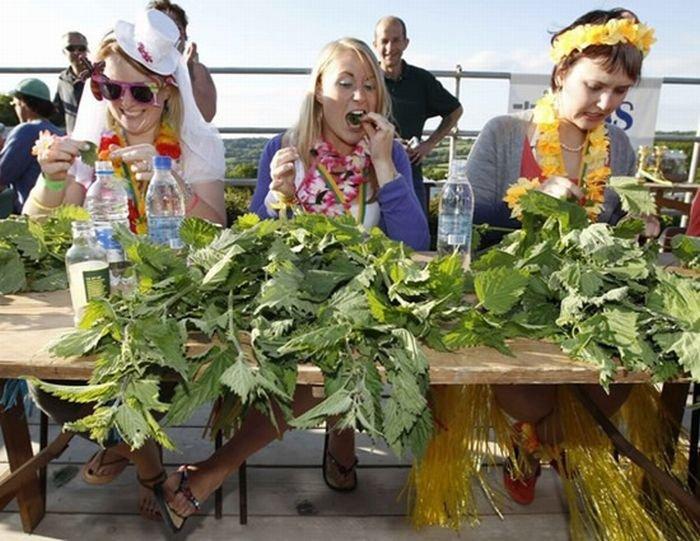 Конкурс по поеданию крапивы (8 фото)