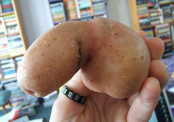 polirovka-penisa