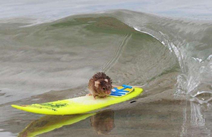 Самый крутой серфер (4 фото)