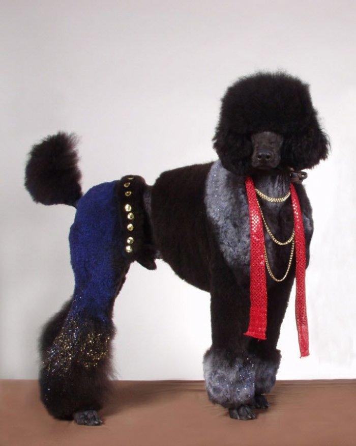 Очень необычные собачьи стрижки (12 фото)
