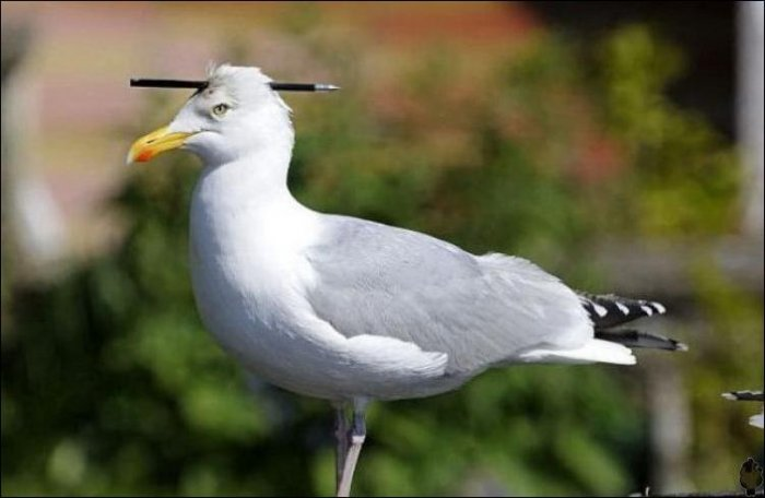Бедная птичка (2 фото)