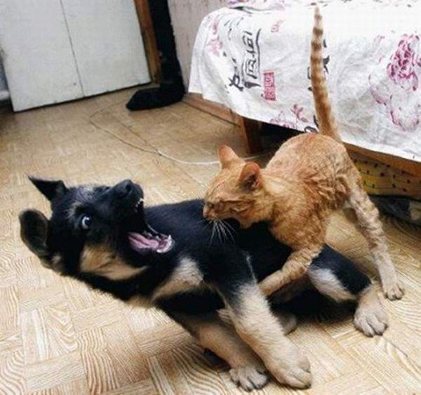 Глупые собаки (25 фото)