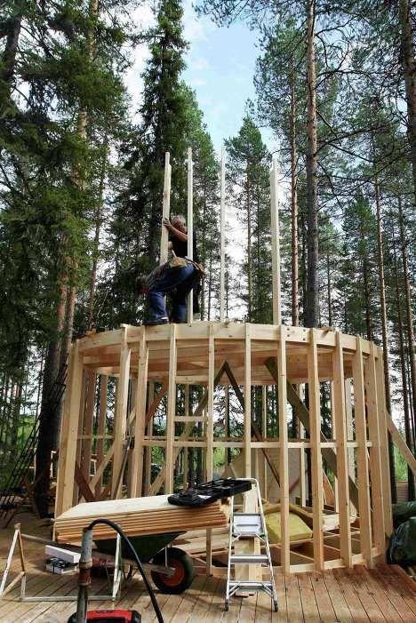 Дома на деревьях (14 фото)