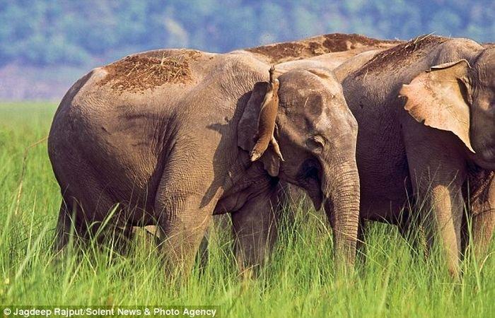 Игрушка слона (3 фото)
