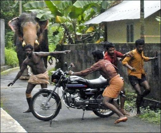 Бешеный слон (5 фото)