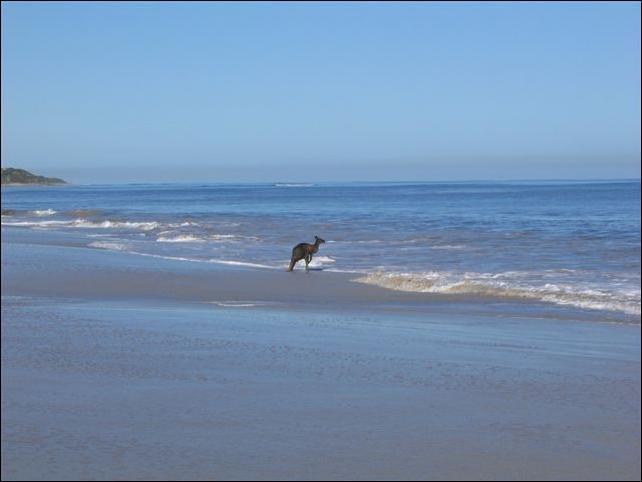 Кенгуру купается (11 фото)