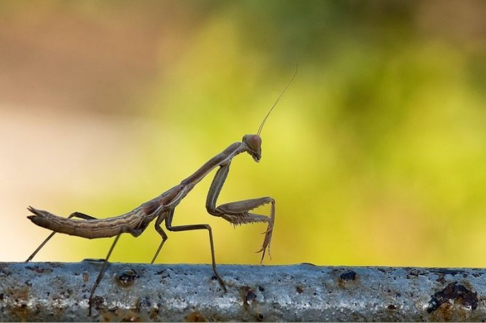 Макрофотографии насекомых (20 фото)