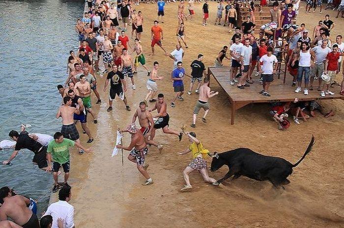 Бег от быков (25 фото)