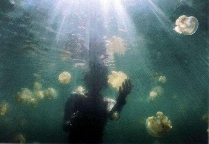 Озеро с медузами (20 фото)