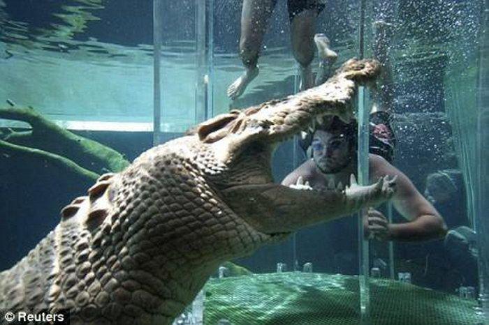 Купание с крокодилами (5 фото)