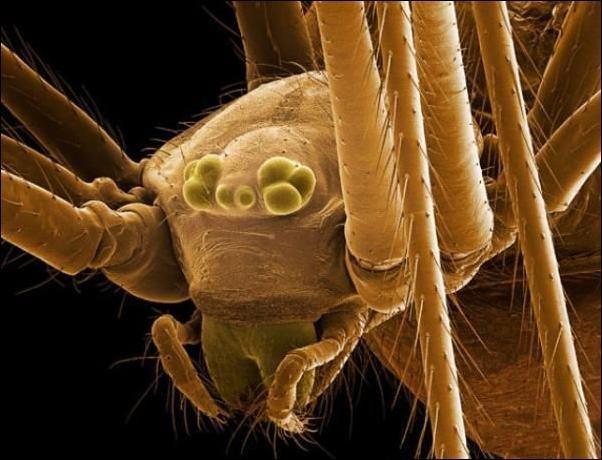 Насекомые под микроскопом (18 фото)