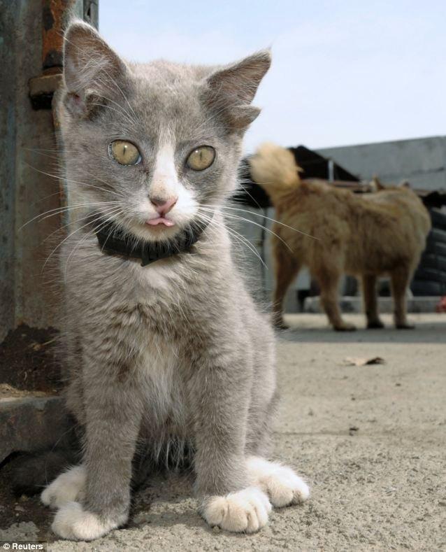Котенок с четырьмя ушами (3 фото)