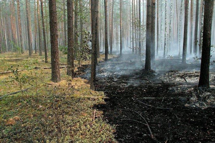 Тушение лесных пожаров глазами добровольцев (83 фото)
