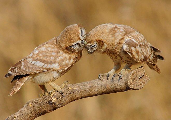 Звериная любовь (20 фото)
