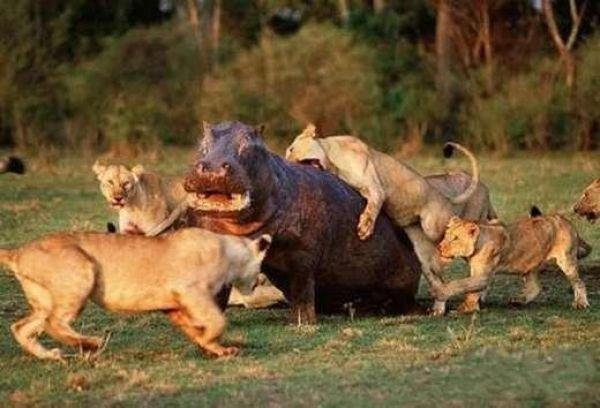 Разборки животных (21 фото)