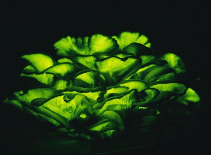 Зеленый цвет (17 фото + текст)