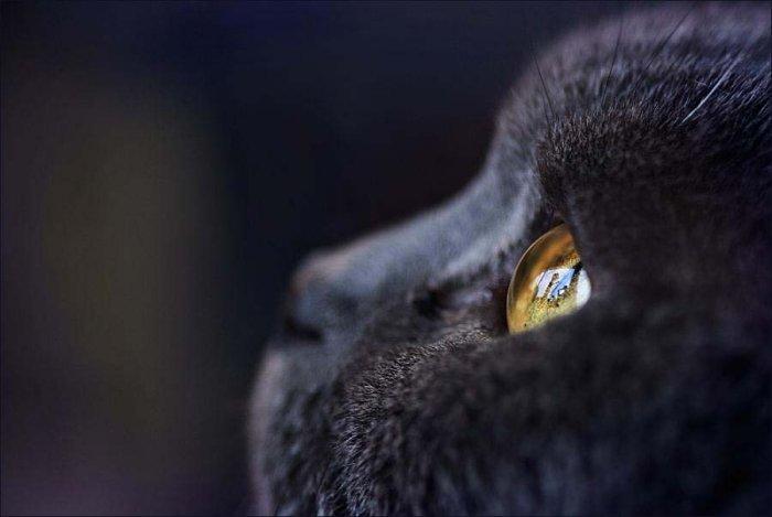 Взгляд животных (20 фото)