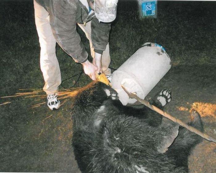 Спасение медведа (10 фото)